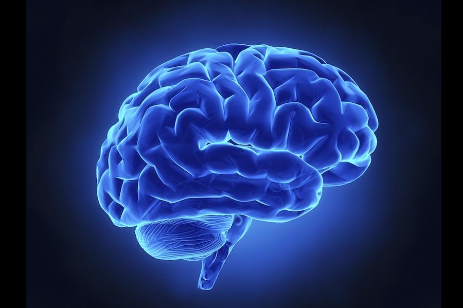 cerveau neuroplasticité